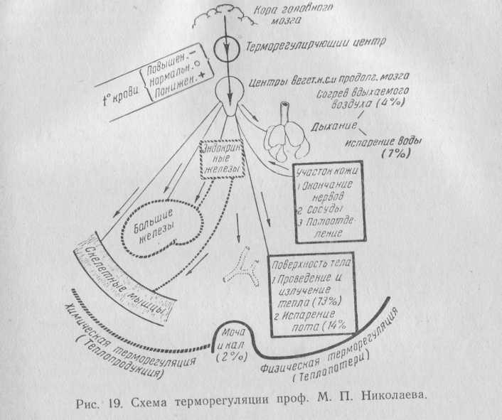 Феназоцин фото