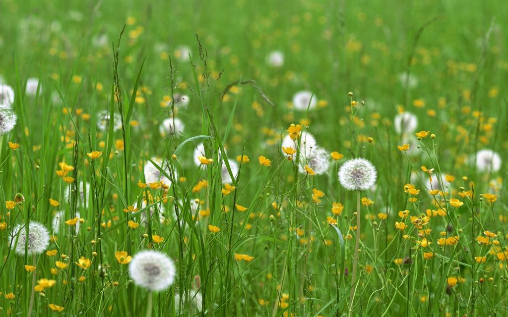 Поле лекарственных трав и цветов