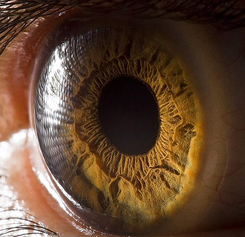 Глазные болезни и их лечение: лекарственные травы для зрения